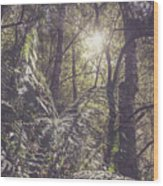 Temperate Rainforest Canopy Wood Print