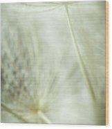 Tender Dandelion Wood Print