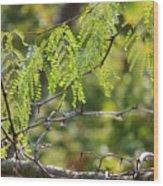 Tender Green Wood Print