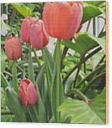 Tender Tulips Wood Print