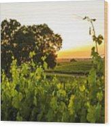 Tendrils Kissing Sun Wood Print