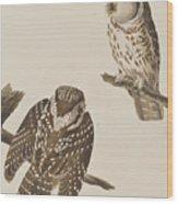 Tengmalm's Owl Wood Print