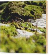 Tennesee Moss Wood Print