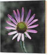 Tennessee Cone Flower Wood Print