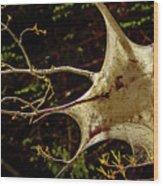 Tent Caterpillars In Rural Ontario Wood Print