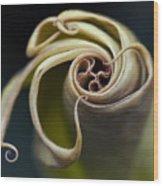 Tentacles Wood Print