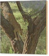 Terengeti Lioness Wood Print