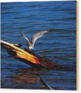 Tern Around Wood Print