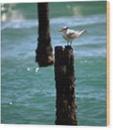 Tern Gulfstream Florida Wood Print
