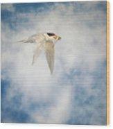 Tern In Flight With Fish Wood Print