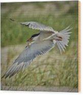 Tern Wood Print