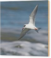 Tern Over The Waves Wood Print
