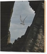 Tern Through The Gap Wood Print