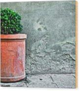 Terracotta Flower Pot On Sidewalk Wood Print