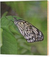 Terrific Capture Of A Paper Kite Butterfly On A Leaf Wood Print