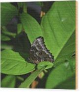 Terrific Eyespots On A Owl Butterfly On Leaves Wood Print