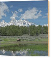 Teton Reflection With Buffalo Wood Print