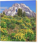 Teton Spring In The Valley Wood Print