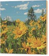 Teton Sun Wood Print