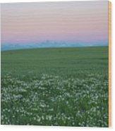 Tetons With Daisies Wood Print