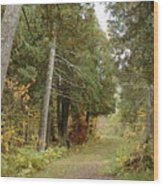 Tettegouche State Park Wood Print