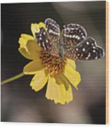 Texan Crescent Butterfly On Marigold-img_1348-2016 Wood Print