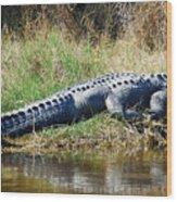 Texas Alligator Wood Print