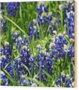Texas Bluebonnets 002 Wood Print