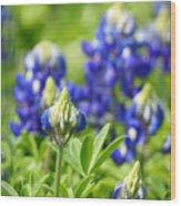 Texas Bluebonnets 003 Wood Print