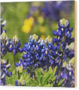 Texas Bluebonnets 006 Wood Print