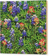 Texas Bluebonnets And Indian Paintbrush Wood Print