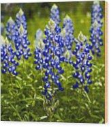 Texas Bluebonnets Wood Print