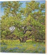 Texas Bluebonnets Under A Giant Oak Tree Wood Print