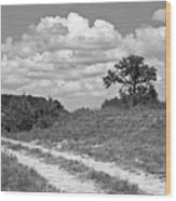 Texas Hill Country Trail Wood Print