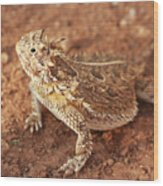 Texas Horned Lizard Wood Print