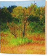 Texas Landscape 102310 Wood Print