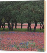 Texas Live Oaks Surrounded By A Field Of Indian Paintbrush And Bluebonnets Wood Print