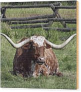 Texas Longhorn Bull At Rest Wood Print