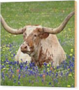 Texas Longhorn In Bluebonnets Wood Print
