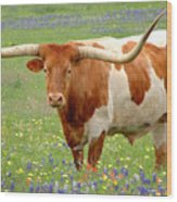 Texas Longhorn Standing In Bluebonnets Wood Print by Jon Holiday