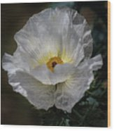 Texas Poppy Wood Print
