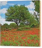 Texas Poppy Field 159 Wood Print