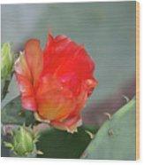 Texas Pricklypear Wood Print