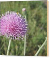 Texas Thistle Wood Print