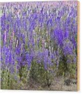 Texas Wildseed Farm Wood Print