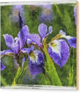 Textured Bearded Irises Wood Print
