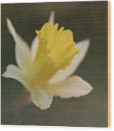 Textured Daffodil Wood Print