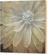 Textured Dahlia Wood Print by Meirion Matthias