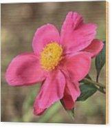 Textured Pink Peony Wood Print