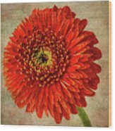Textured Red Daisy Wood Print